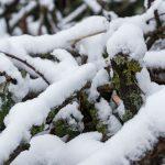 Snoeihout onder sneeuw, Gert Buchner